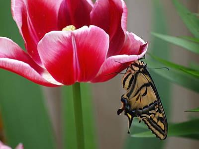 Photograph - A Butterflies Angle by Teri Schuster