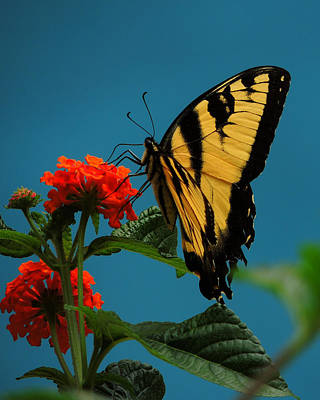 Art Print featuring the photograph A Butterfly by Raymond Salani III