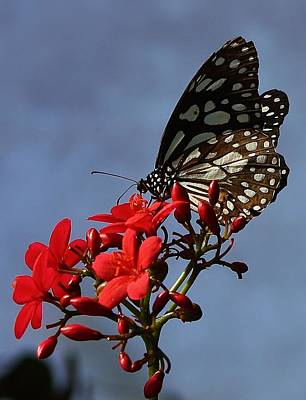 Photograph - A Butterfly's World by Bruce Bley