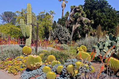 Photograph - A Cacophony Of Cacti by Denise Mazzocco