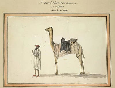 Camel Photograph - A Camel Harcarra by British Library
