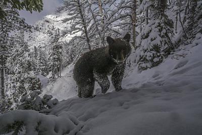 A Camera Trap Captures A Bear At Eagle Art Print