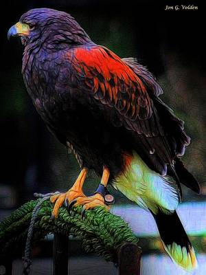 Painting - A Captured Hawk by Jon Volden