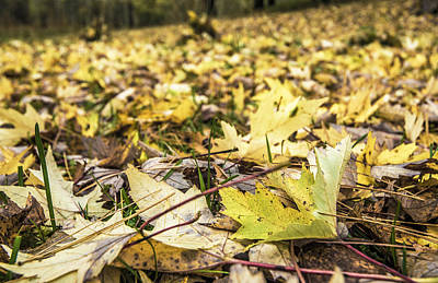 Photograph - A Carpet Of Leaves by Arkady Kunysz