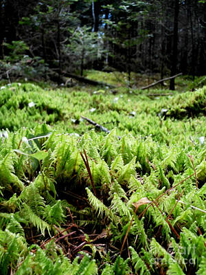 A Carpet Of Moss  Art Print by Steven Valkenberg