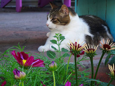 Photograph - A Cat And His Flowers by Jacqueline  DiAnne Wasson
