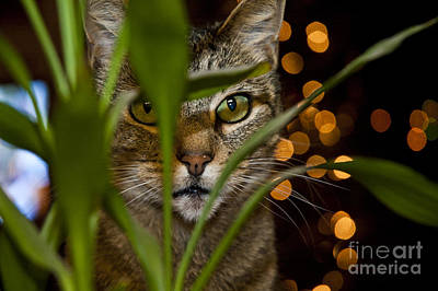 Gray Tabby Photograph - A Cat Hides Behind A Plant 2 by Micah May