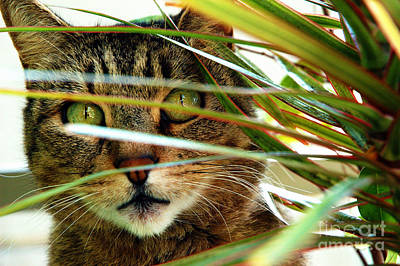 Gray Tabby Photograph - A Cat Hides Behind A Plant 3 by Micah May