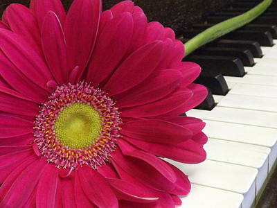 Piano Photograph - A Cheerful Song by Lorna Hooper