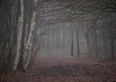 Fallen Leaf Photograph - A Chill In The Trees by Odd Jeppesen
