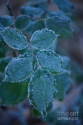 Photograph - A Christmas Frost by Maria Urso