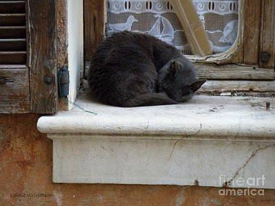 A Circled Up Cat  Art Print by Lainie Wrightson