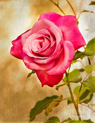 Photograph - A Classic Pink Rose by MaryJane Armstrong