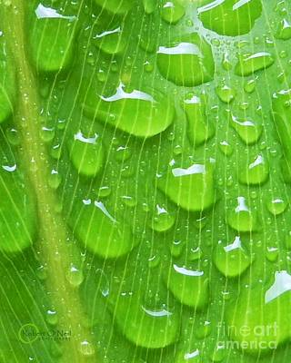 Art Print featuring the photograph A Cleansing Morning Rain by Robert ONeil