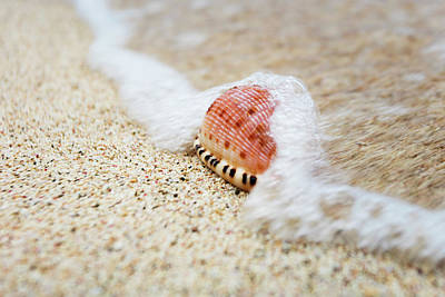 Cowry Photograph - A Close Up Of A Cowry Shell by Jenna Szerlag
