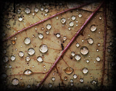 A Close Up Of A Wet Leaf Art Print by Andrew Sliwinski