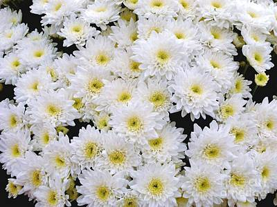 Photograph - A Cluster Of White Chrysanthemums by Joan-Violet Stretch