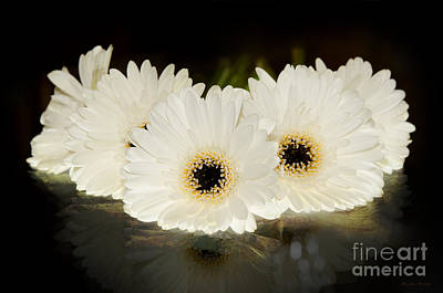 Photograph - A Cluster Of White Gerber Daisies by MaryJane Armstrong