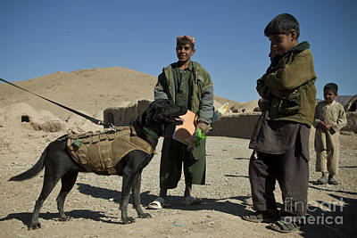 Photograph - A Coalition Forces Military Working Dog by Stocktrek Images