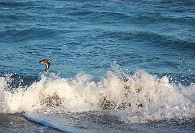Sandpiper Digital Art - A Coastal Scene by Suzanne Gaff