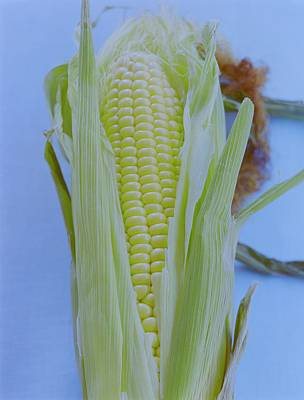 Healthy Food Photograph - A Cob Of Corn by Romulo Yanes