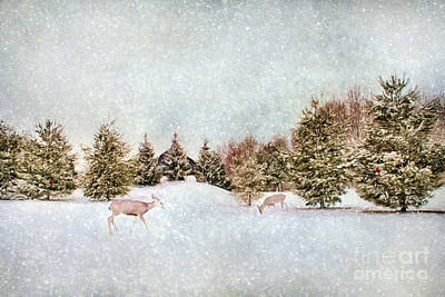A Cold Winters Day Art Print by Darren Fisher