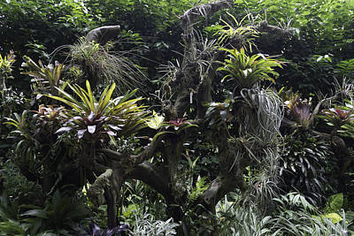A Collection Of Plants Inside The National Orchid Garden In Singapore Art Print