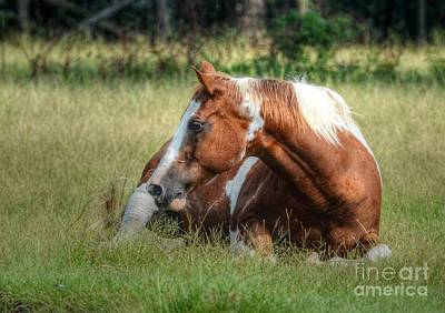 Photograph - A Comfy Resting Place by Kathy Baccari