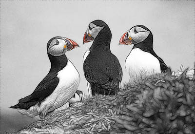 Photograph - A Contemplation Of Puffins by Fiona Messenger