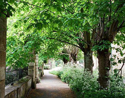 Photograph - A Cotswold Lane by Marilyn Wilson