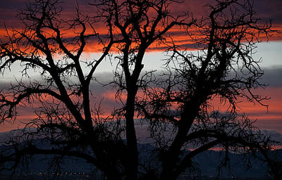 Photograph - A Cottonwood Sunset by Eric Rundle
