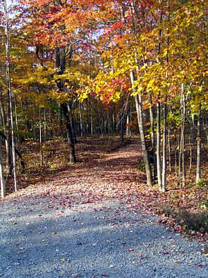 A Courtry Lane In Autumn Art Print by Douglas Barnett