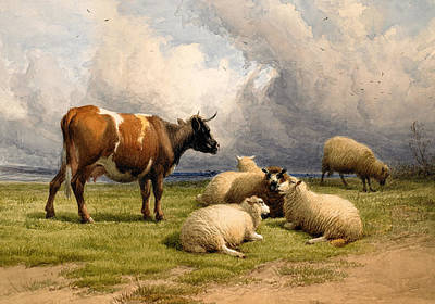 A Cow And Five Sheep Print by Thomas Sidney Cooper