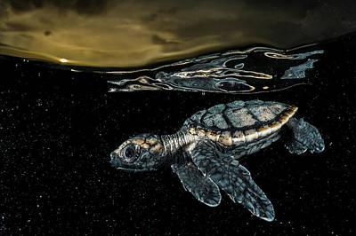 A Critically Endangered Hawksbill Sea Art Print