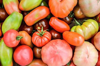 Solanum Lycopersicum Photograph - A Crop Of Varieties Of Tomato by Photostock-israel