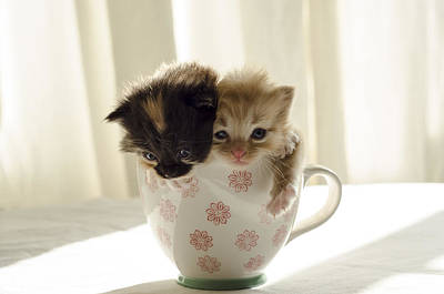 A Cup Of Cuteness Art Print by Spikey Mouse Photography