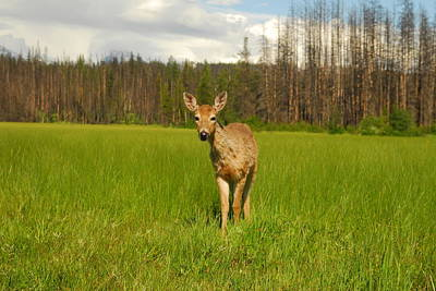 Photograph - A Curious Friend by Larry Moloney