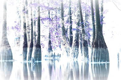 Curated Beach Towels - A Cypress Lake by Travis Truelove