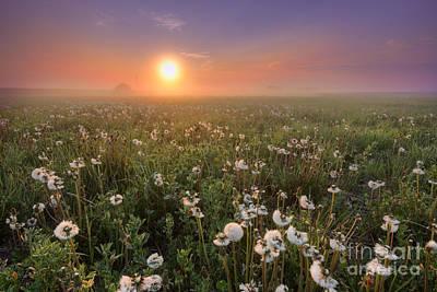 Alberta Landscape Photograph - A Dandelion Kind Of Morning by Dan Jurak