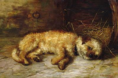 Of Dogs Painting - A Dandie Dinmont by Philip Eustace Stretton
