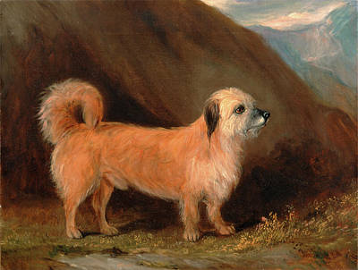 A Dandie Dinmont Terrier Signed And Dated Print by Litz Collection