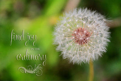 Photograph - A Dandy Dandelion With Message by Mary Buck