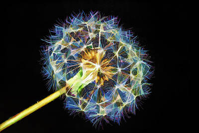 Dandelion Digital Art - A Dandy Vision by Bill Tiepelman