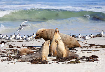 Sea Lions Photograph - A Day At The Beach by Mike Dawson