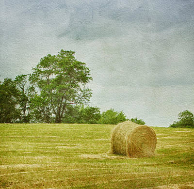 A Day At The Farm Art Print by Kim Hojnacki