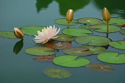 A Day At The Lily Pond Art Print by Suzanne Gaff