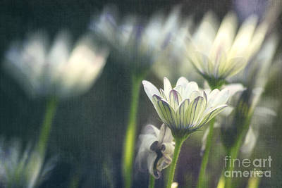 Photograph - A Day In August by Jutta Maria Pusl