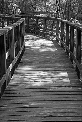 Photograph - A Day In The Congaree Swamp by Suzanne Gaff