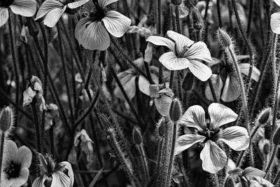 Photograph - A Day In The Garden Bw by JC Findley