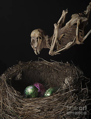 A Dead Bird Flies Into Its Nest Only To Find Chocolate Eggs Art Print